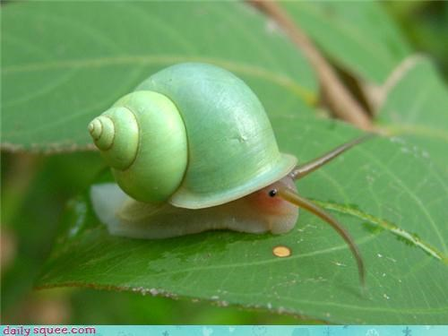 cute,snail,what is it