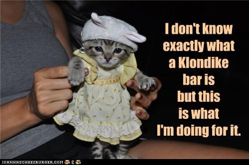 caption captioned cat costume dont-know dress dressed up exactly jingle kitten klondike bar noms treat unsure what is it - 3626359040