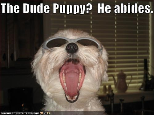 the dude puppy he abides cheezburger funny memes funny pictures
