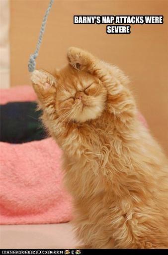 cute nap sleepy - 3627662848