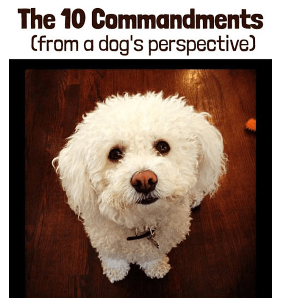the 10 commandments according to my dog