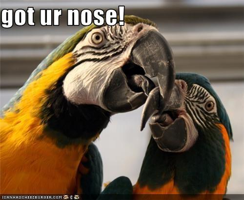 annoying biting lolbirds nose parrots - 3628588288