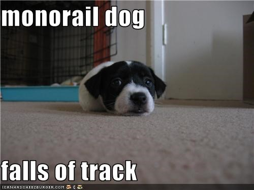 border collie,cute,derailed,fell off,monorail dog,puppy,puppy eyes,track
