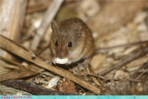 mouse noms Om Nom Monday - 3628763136