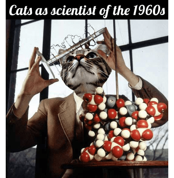 if cats were scientists in the 1960's