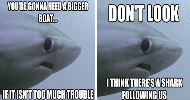 shark memes shy funny fish sharks aww cute lol meme adorable classic | DON'T LOOK I THINK THERE'S A SHARK FOLLOWING US | GONNA NEED A BIGGER BOAT IF IT ISN'T TOO MUCH TROUBLE