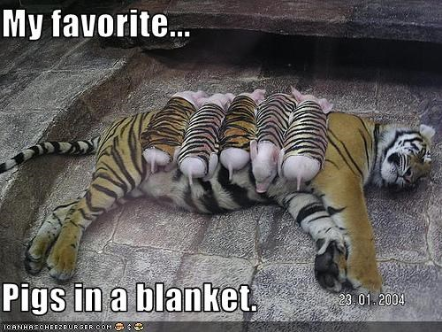 blanket,caption,captioned,costume,dressed up,favorite,pig,pun,tiger