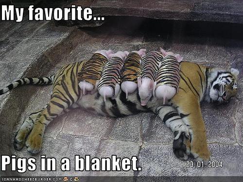 blanket caption captioned costume dressed up favorite pig pun tiger - 3629441280