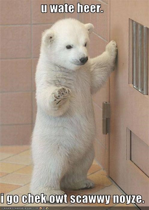 cute,Hall of Fame,lolbears,lolcubs,LOLs To Go,polar bear