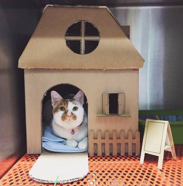 vet clinic creates house for cat