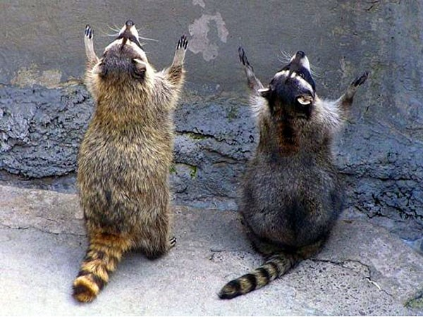 funny photos of praying animals