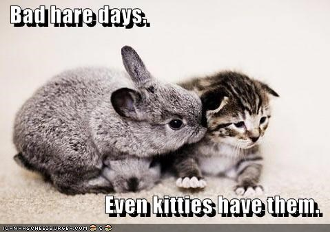 bad bad hair day bunny caption captioned cat day hair hare kitten pun rabbit - 3631594752