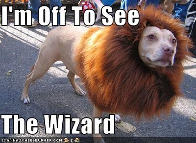 dogs,lion,pitbull,wizard of oz