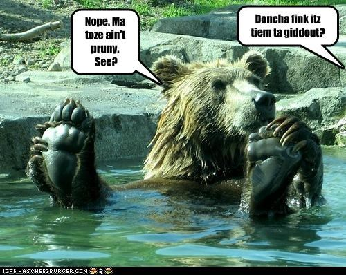 bath lolbears swimming - 3632245760