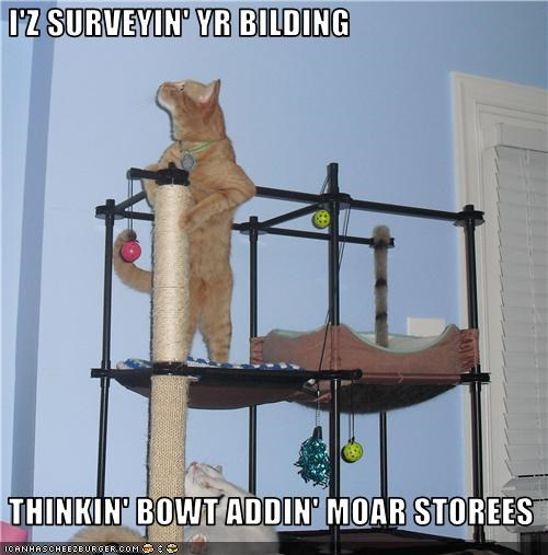 climbing,scratching posts,toys