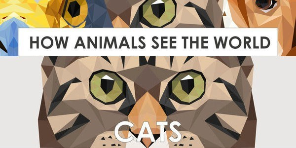 infographics of how animals see the world