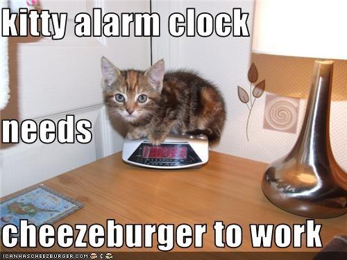 Cheezburger Image 3633376256