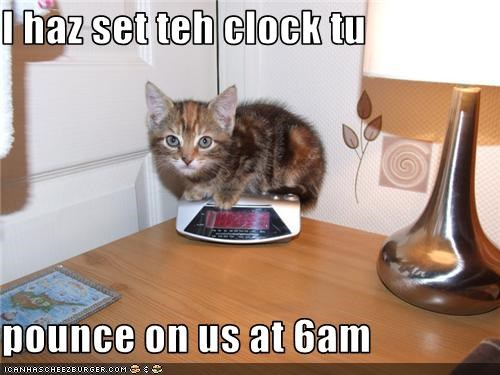 alarm,alarm clock,caption,captioned,cat,clock,kitten,pounce,set,time