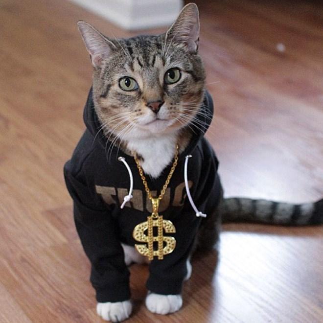cats in sweatshirts