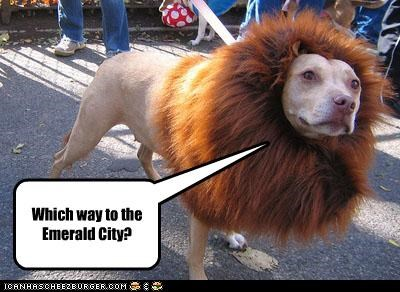 costume,Cowardly Lion,emerald city,lion,mane,pit bull,wizard of oz