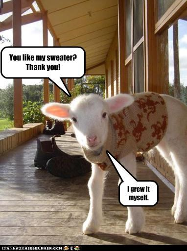 baby,caption,captioned,compliment,DIY,grew,lamb,like,myself,sheep,sweater,thank you