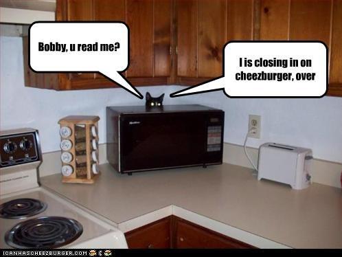 cheezburger hiding plotting - 3634725376
