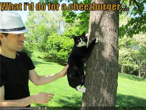 Cheezburger Image 3634913024
