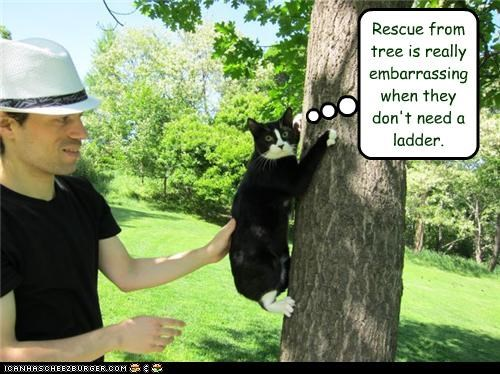 ashamed caption captioned cat climbing embarrassed embarrassing ladder low rescue tree unnecessary