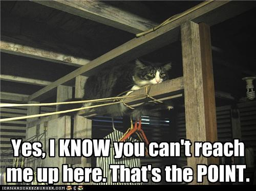 cant caption captioned cat elevated hiding high point Reach that up - 3635885312