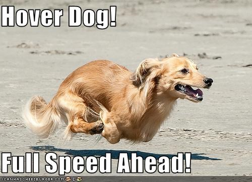 dogs hover dog
