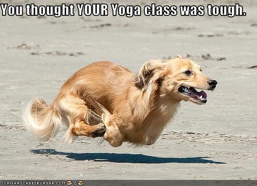 dogs,hover dog,yoga