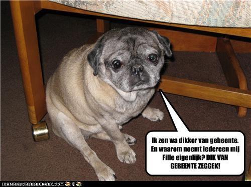 Cheezburger Image 3636496896