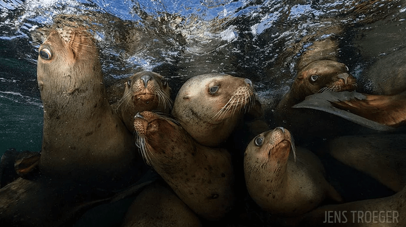 world underwater winners Photo contest - 3637509