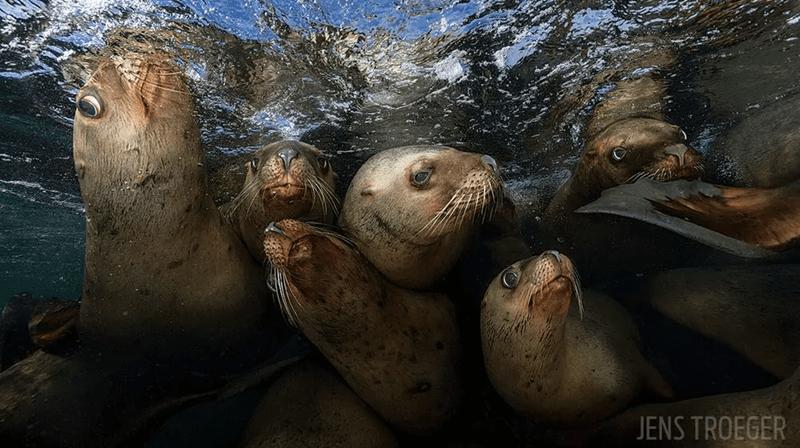 world underwater winners Photo contest - 3637509