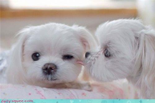 face nerd jokes puppy - 3637757952