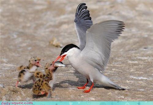 baby bird whatsit - 3637758464