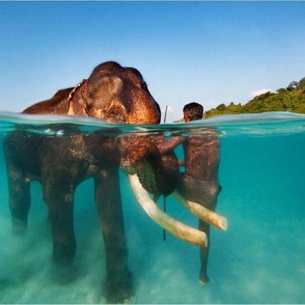 photos swimming thailand elephants - 3637765
