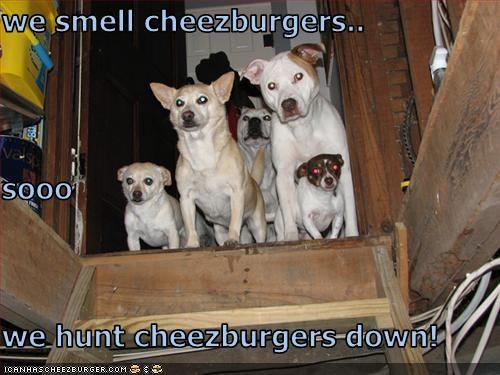 Cheezburger Image 3637775616