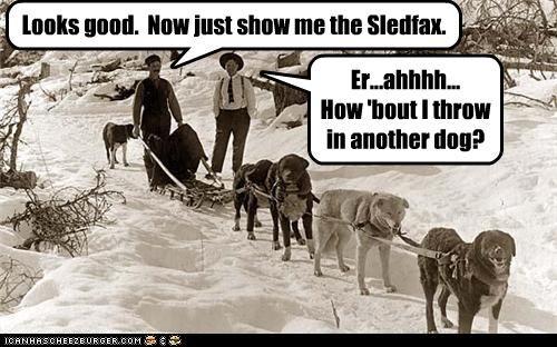 animals dogs gentleman Photo photograph snow - 3637967104