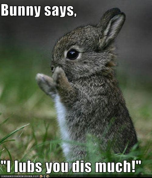 animated gifs bunneh bunny gifs hug hump love - 3638132480