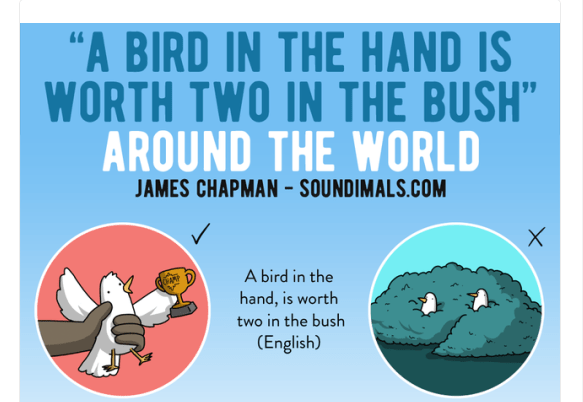 animal phrases in different languages