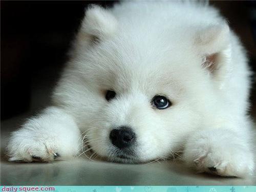 fluff wolf - 3638431488