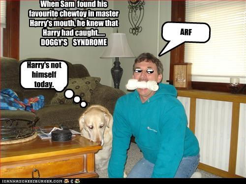 Harry's not himself today. ARF When Sam found his favourite chewtoy in master Harry's mouth, he knew that Harry had caught..... DOGGY'S SYNDROME