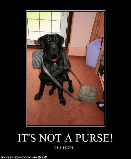 IT'S NOT A PURSE! It's a satchel...