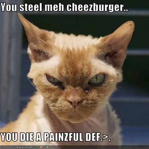 Cheezburger Image 3639714816