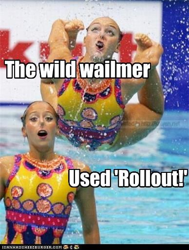 The wild wailmer Used 'Rollout!'