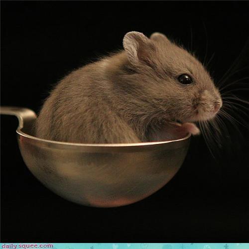 mouse nerd jokes squeelixir - 3639778048