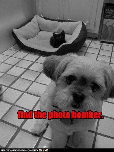 Cheezburger Image 3640093440