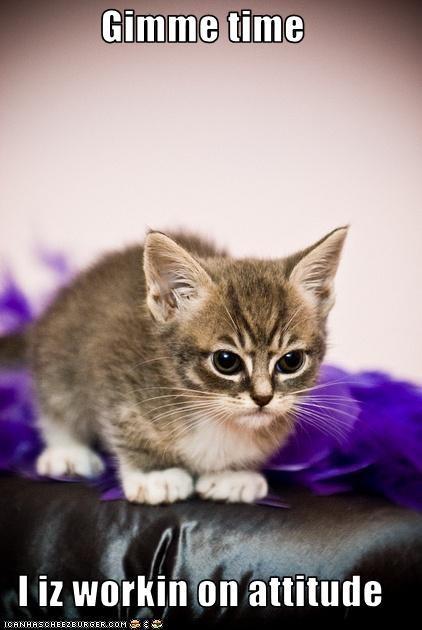 angry attitude kitten - 3641388544
