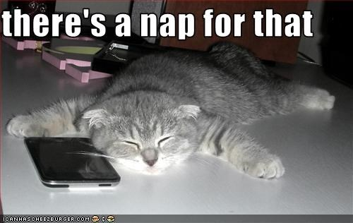 App,caption,nap,phone